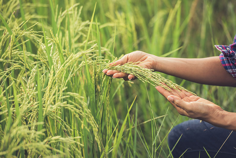agro-consultancy