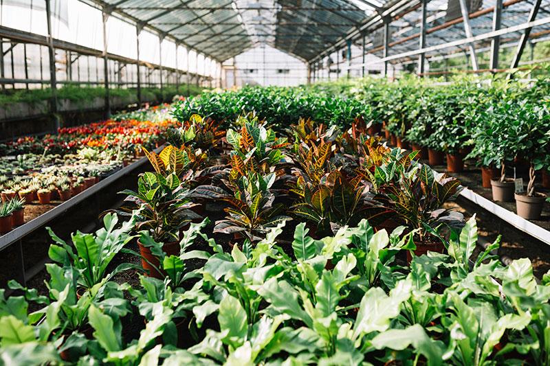 Nursery Plant Production