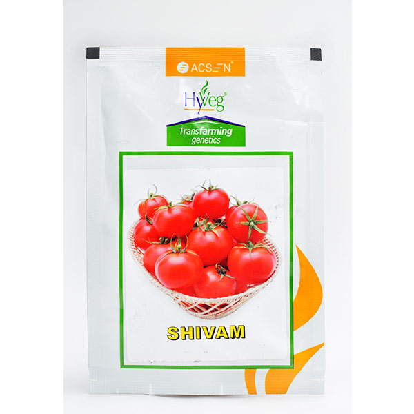 Shivam Tomato seeds 10 gm