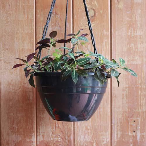 Tuka Plastic Pot